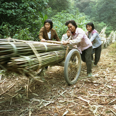 China's Last Bamboo Harvesters